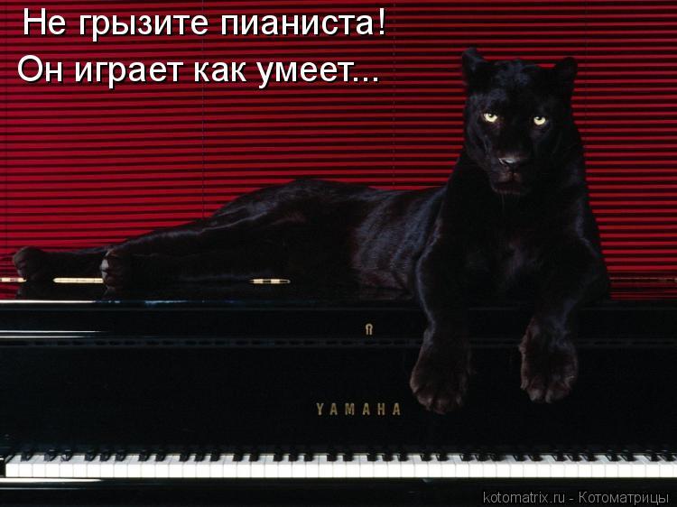 Котоматрица: Не грызите пианиста! Он играет как умеет...