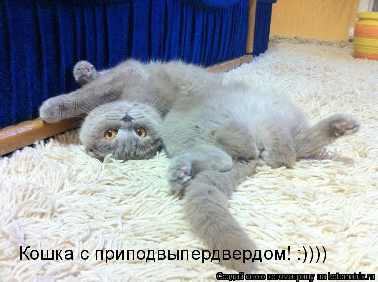 Котоматрица: Кошка с приподвыпердвердом! :))))