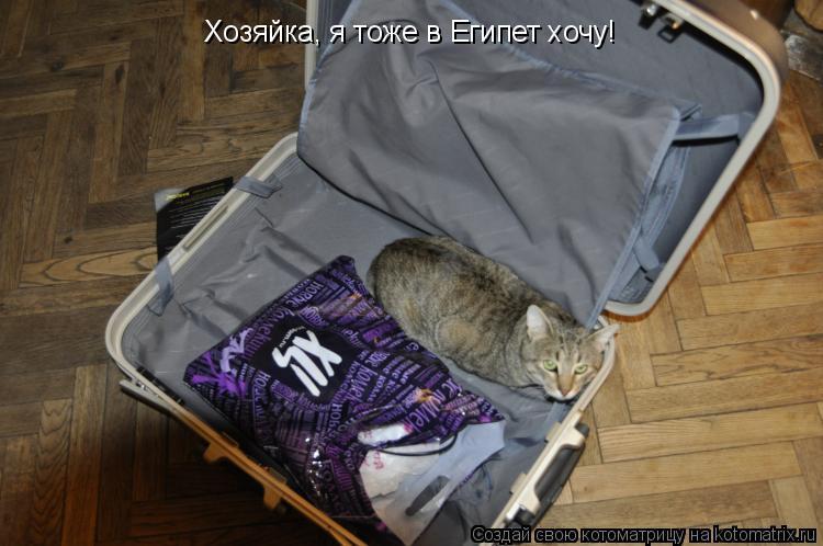 Котоматрица: Хозяйка, я тоже в Египет хочу!