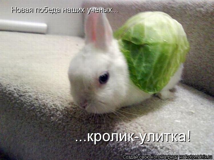 Котоматрица: Новая победа наших ученых... ...кролик-улитка!