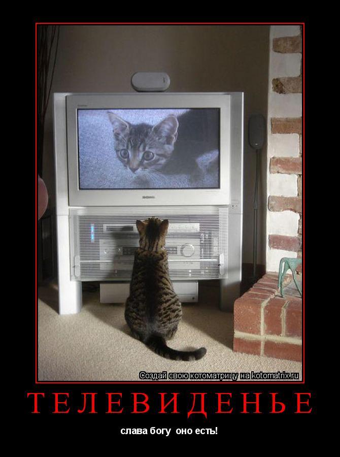 Котоматрица: телевиденье слава богу  оно есть!
