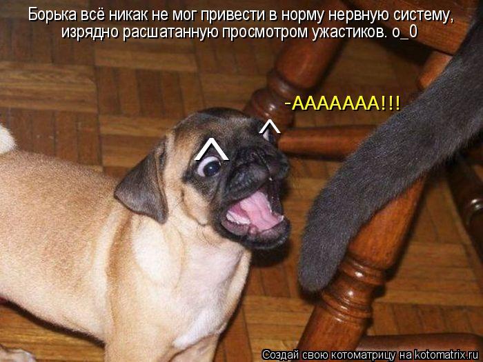 Котоматрица: Борька всё никак не мог привести в норму нервную систему,  изрядно расшатанную просмотром ужастиков. о_0 ^ ^ -ААААААА!!!