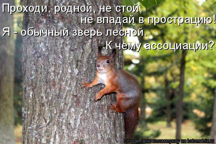 Котоматрица: Проходи, родной, не стой, не впадай в прострацию! Я - обычный зверь лесной.  К чему ассоциации?