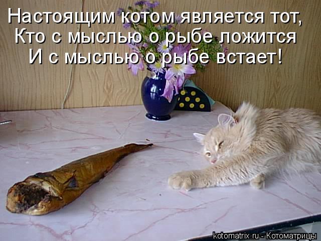 Настоящим котом является тот, Кто с мыслью о рыбе ложится И с мыслью о
