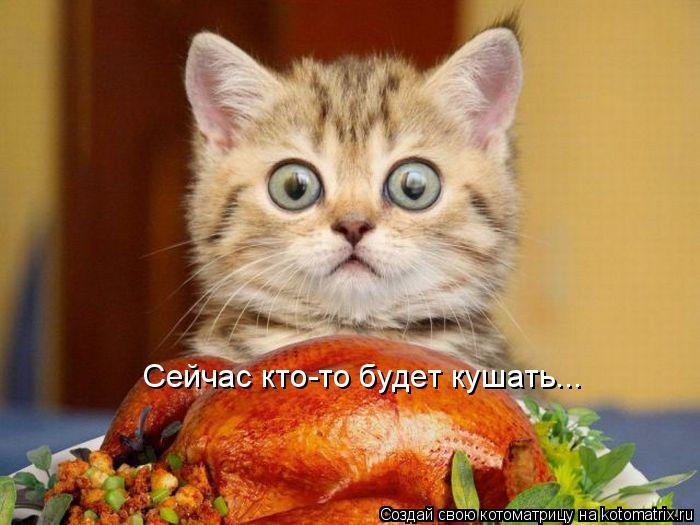 Котоматрица: Сейчас кто-то будет кушать...
