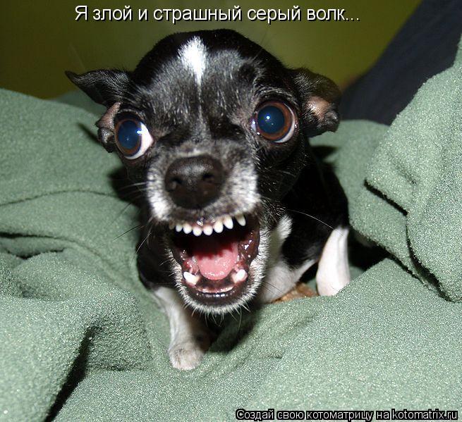 Котоматрица: Я злой и страшный серый волк...