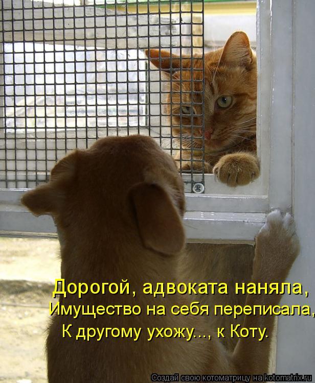 Котоматрица: Дорогой, адвоката наняла, Имущество на себя переписала, К другому ухожу..., к Коту.