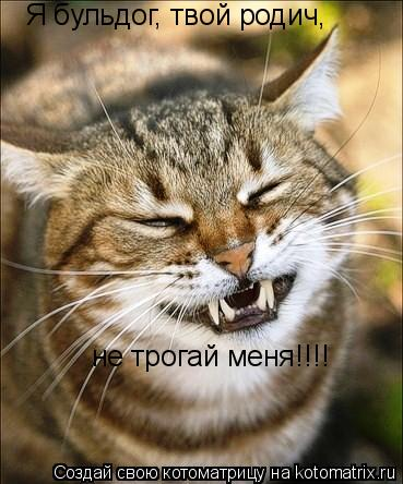 Котоматрица: Я бульдог, твой родич,  не трогай меня!!!!