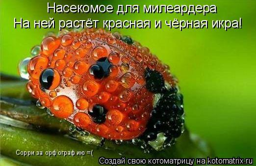 Котоматрица: На ней растёт красная и чёрная икра! Насекомое для милеардера Сорри за орфографию =(