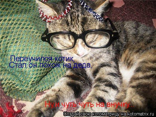 Котоматрица: Переучился котик, Стал он похож на деда, Ну,и чуть чуть на внучку...