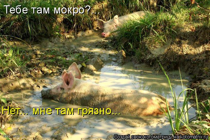 Котоматрица: Тебе там мокро?... Нет... мне там грязно...