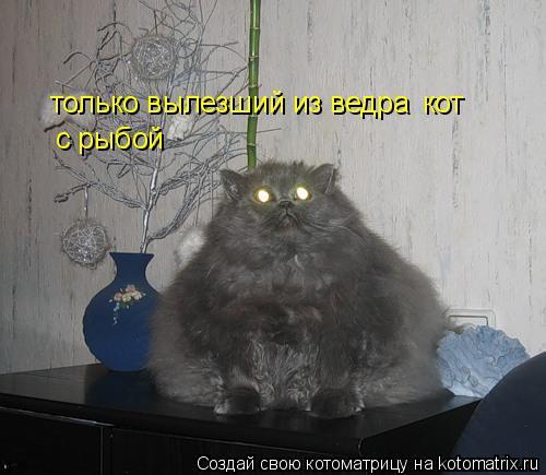 Котоматрица: только вылезший из ведра кот  с рыбой