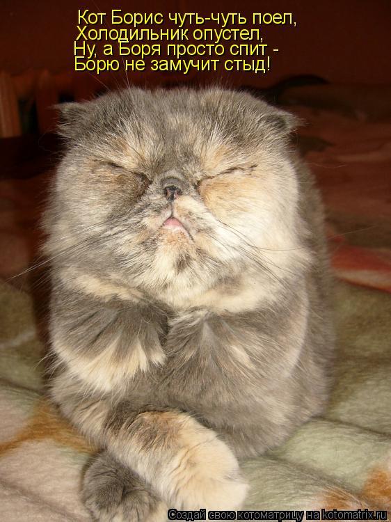 Котоматрица: Кот Борис чуть-чуть поел, Холодильник опустел, Ну, а Боря просто спит -  Борю не замучит стыд!