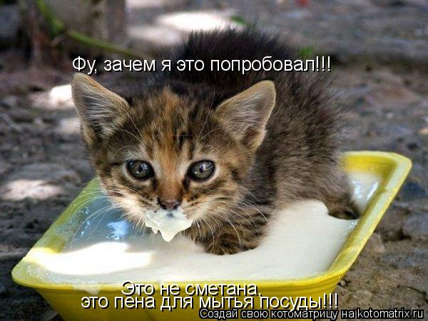 Котоматрица: Фу, зачем я это попробовал!!! Это не сметана, это пена для мытья посуды!!!