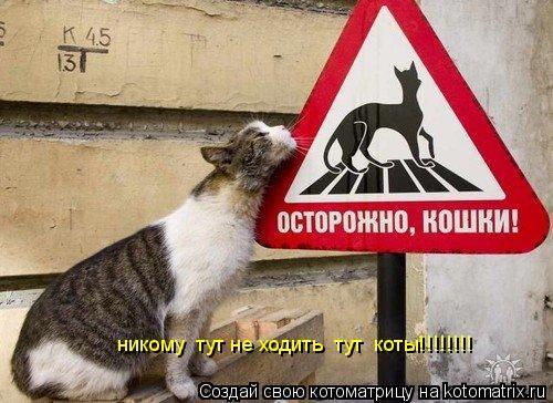 Котоматрица: никому  тут не ходить  тут  коты!!!!!!!!