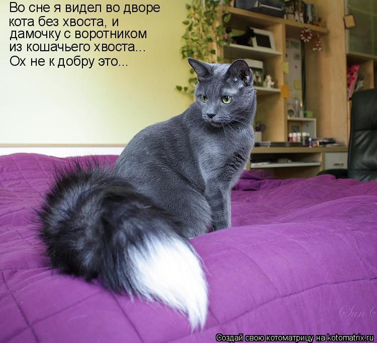 Котоматрица: Ох не к добру это... Во сне я видел во дворе кота без хвоста, и дамочку с воротником из кошачьего хвоста...