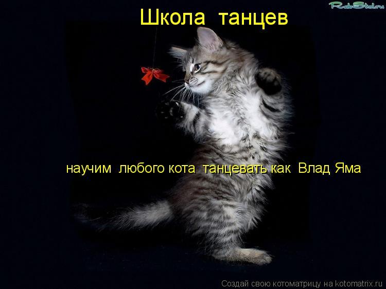 Котоматрица: Школа  танцев научим  любого кота  танцевать как  Влад Яма