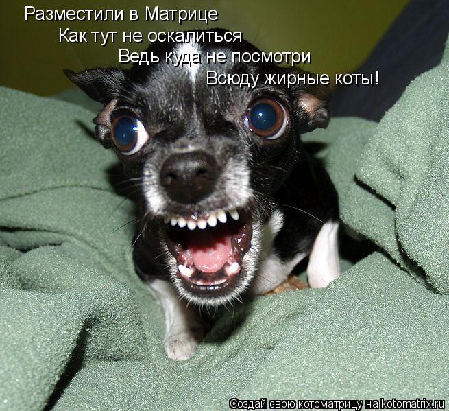 Котоматрица: Разместили в Матрице Как тут не оскалиться Ведь куда не посмотри Всюду жирные коты!