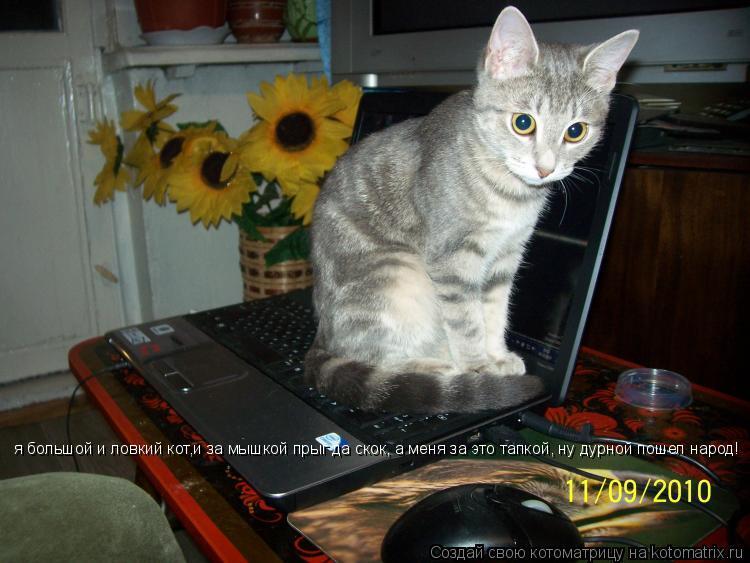 Котоматрица: я большой и ловкий кот,и за мышкой прыг да скок, а меня за это тапкой, ну дурной пошел народ!