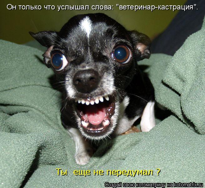 """Котоматрица: Он только что услышал слова: """"ветеринар-кастрация"""". Ты  еще не передумал ?"""