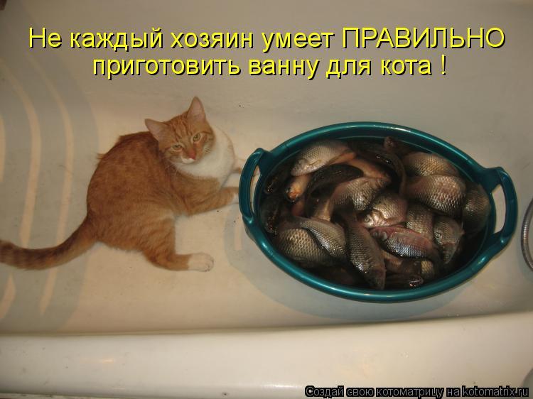 Не каждый хозяин умеет ПРАВИЛЬНО приготовить ванну для кота !