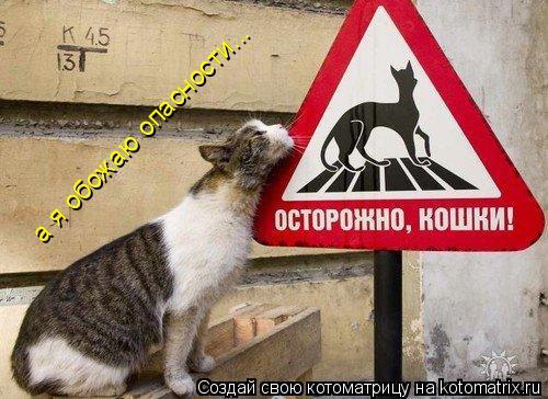 Котоматрица: а я обожаю опасности...