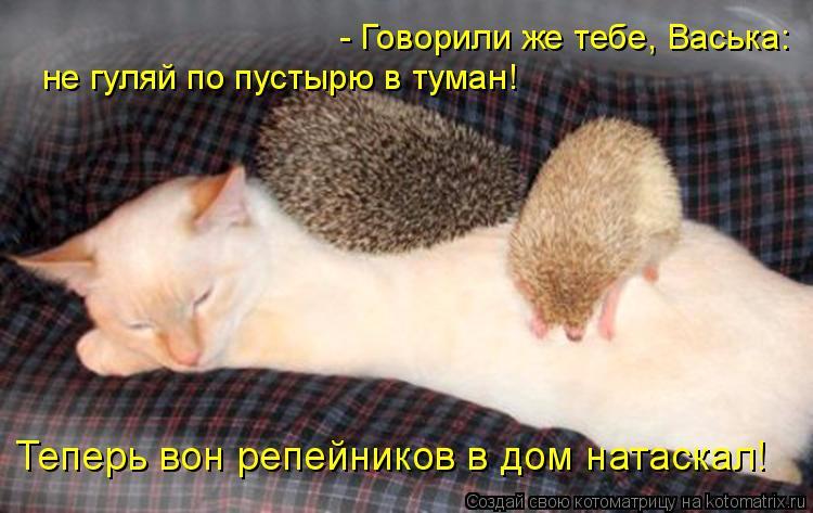 - Говорили же тебе, Васька: не гуляй по пустырю в туман! Теперь вон ре