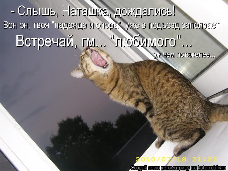 """Котоматрица: - Слышь, Наташка, дождались!  Вон он, твоя """"надежда и опора""""  уже в подъезд заползает!  Встречай, гм... """"любимого""""... уж чем потяжелее..."""