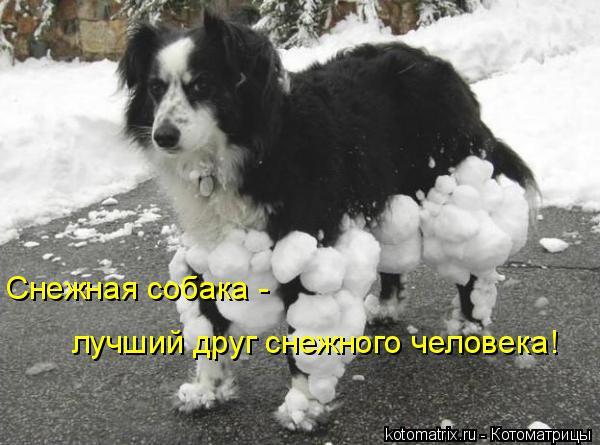 Котоматрица: Снежная собака -  лучший друг снежного человека!