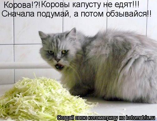 Котоматрица: Корова!?! Коровы капусту не едят!!! Сначала подумай, а потом обзывайся!!