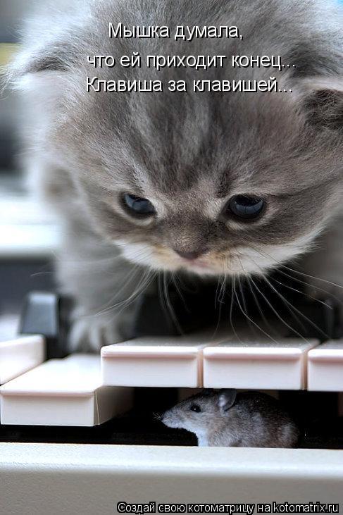 Котоматрица: Мышка думала,  что ей приходит конец... Клавиша за клавишей...