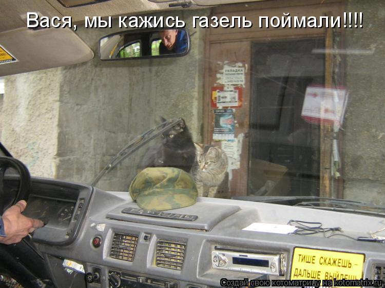 Котоматрица: Вася, мы кажись газель поймали!!!!