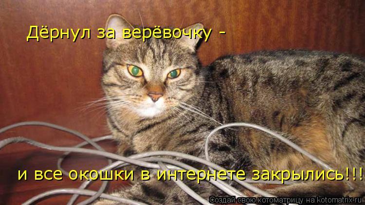 Котоматрица: Дёрнул за верёвочку - и все окошки в интернете закрылись!!!