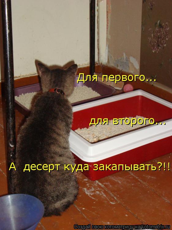 Котоматрица: Для первого... для второго... А  десерт куда закапывать?!!