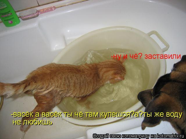 Котоматрица: -васёк а васёк ты чё там купешся?а?ты же воду не любишь -ну и чё? заставили