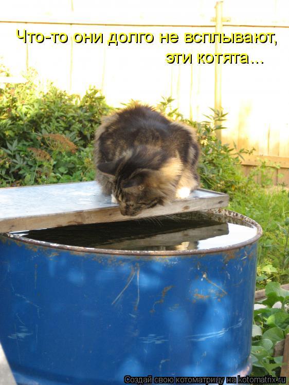 Котоматрица: Что-то они долго не всплывают, эти котята...