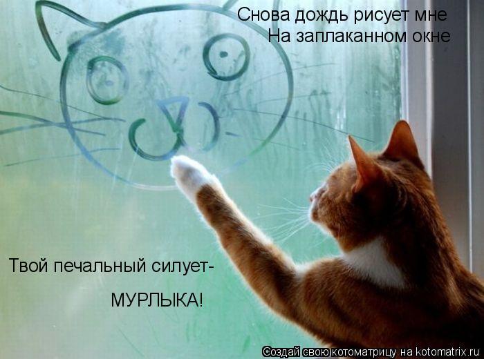Котоматрица: Снова дождь рисует мне На заплаканном окне Твой печальный силует- МУРЛЫКА!