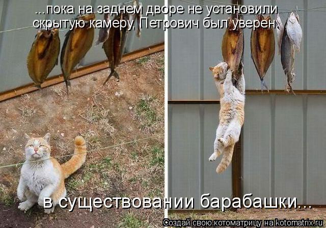 Котоматрица: ...пока на заднем дворе не установили  скрытую камеру, Петрович был уверен   в существовании барабашки...