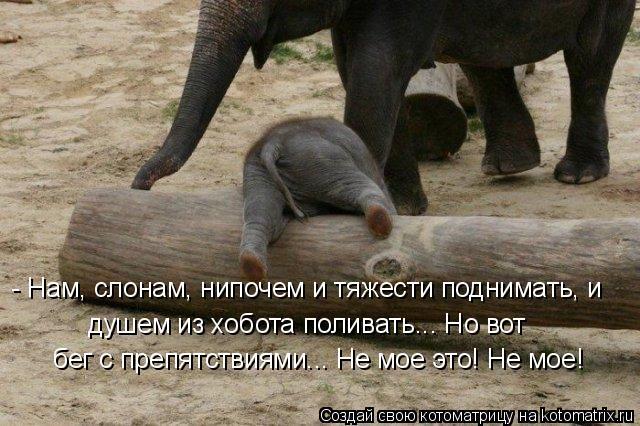 - Нам, слонам, нипочем и тяжести поднимать, и душем из хобота поливать