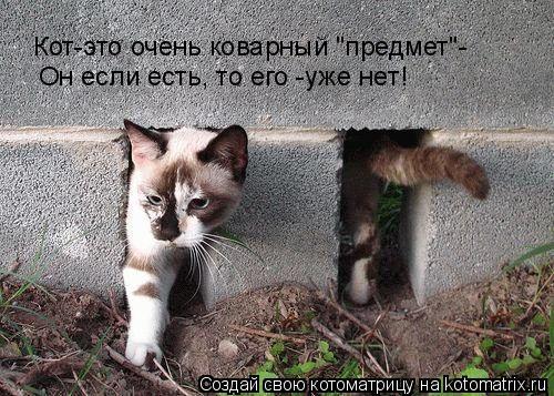 """Котоматрица: Он если есть, то его -уже нет! Кот-это очень коварный """"предмет""""-"""