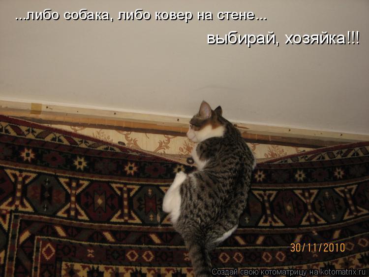 Котоматрица: выбирай, хозяйка!!! ...либо собака, либо ковер на стене...