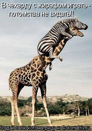 Котоматрица: В чехарду с жирафом играть -  потомства не видать!!