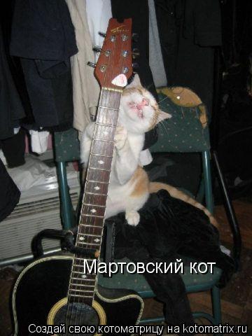 Котоматрица: Мартовский кот