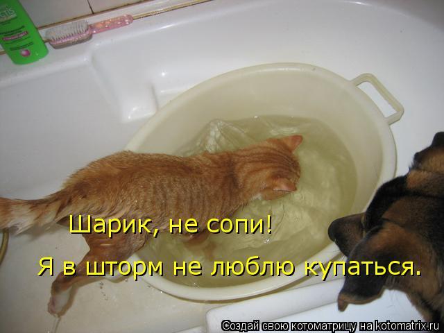 Котоматрица: Шарик, не сопи! Я в шторм не люблю купаться.