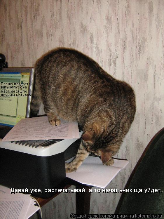Котоматрица: Прошу предоста- вить отпуск на март месяц по личным мотивам Давай уже, распечатывай, а то начальник ща уйдет...