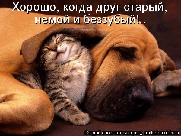 Котоматрица: Хорошо, когда друг старый, немой и беззубый!..