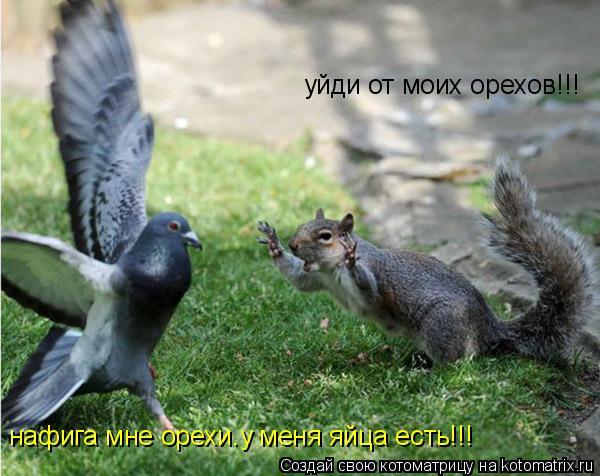 Котоматрица: уйди от моих орехов!!! нафига мне орехи.у меня яйца есть!!!