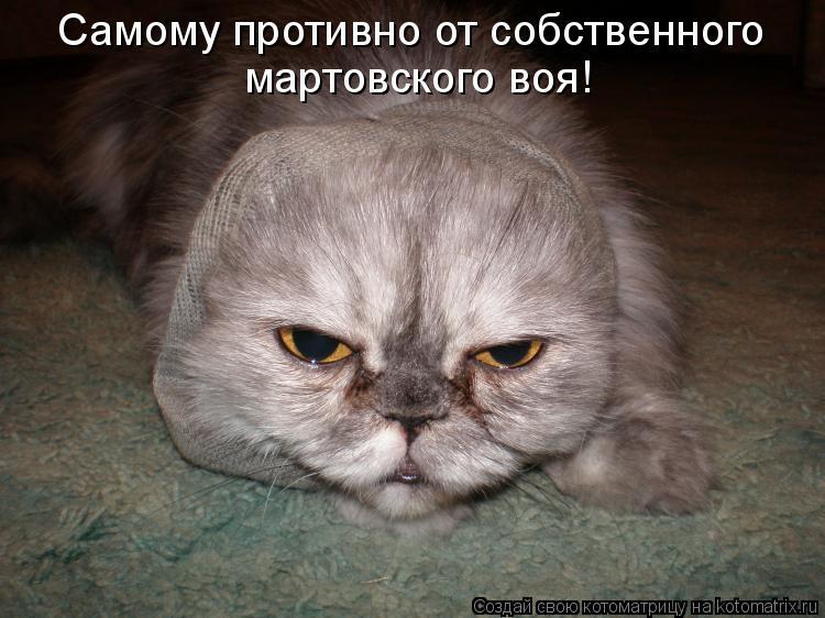 Котоматрица: Самому противно от собственного  мартовского воя!