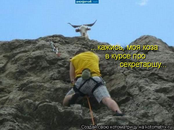 Котоматрица: ...кажись, моя коза в курсе про  секретаршу...
