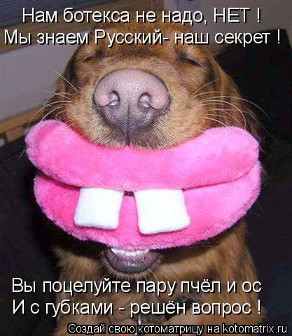 Котоматрица: Нам ботекса не надо, НЕТ ! Мы знаем Русский- наш секрет ! Вы поцелуйте пару пчёл и ос И с губками - решён вопрос !